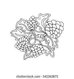 Hand drawn doodle outline grape fruit magic line art element with floral ornament. Sketch for poster, adult coloring pages.