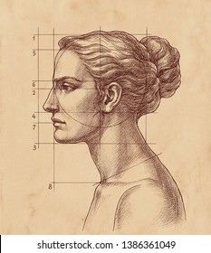 Hand drawn educational illustration in retro style, woman's head classical proportions, side view, on brown old paper.
