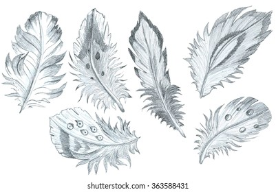 hand drawn feathers pencil sketch collection