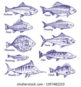 Hand drawn fishes. Ocean sea river fishes sketch fishing seafood herring tuna salmon anchovy trout perch pike, collection