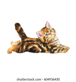Hand drawn fluffy scottish fold kitten portrait. Painting isolated pets illustration on white background. Watercolor tabby british short hair little cute cat