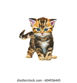 Hand drawn fluffy scottish fold kitten portrait. Watercolor tabby british short hair cat. Painting isolated pets illustration on white background
