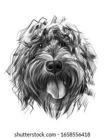 hand drawn funny dog portrait