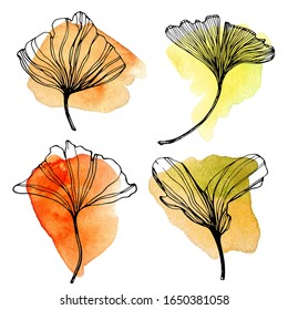 Hand drawn Ginkgo biloba leaves set with watercolor stains. Outline collection of autumn ginkgo leaf. Set with floral exotic leaves for your design.