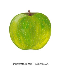 hand drawn green apple - raster realistic illustration isolated on white. Realistic drawing of an apple with gouache paints
