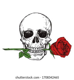 Hand drawn happy human skull with red rose - sketched skull printable illustration
