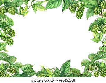 Hand drawn hop branches. Watercolor green rectangle horizontal frame  with leaves and cones of hops. Oktoberfest theme. Space for text.