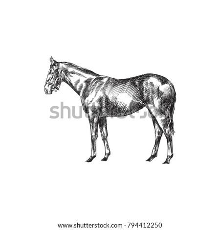 Royalty Free Stock Illustration Of Hand Drawn Horse Sketch Symbol