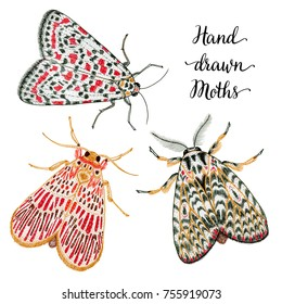 Hand drawn illustration of colorful ink moth isolated on white background for your design, t-shirt, scrapbooking