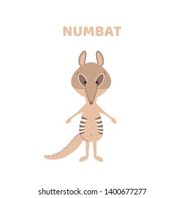Hand drawn illustration of a cute funny numbat. Alphabet with cute animals. Isolated objects. Scandinavian style flat design. For children's books and development children's cards and posters.