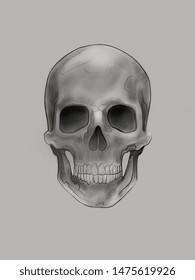 Hand drawn illustration or drawing of a human skull