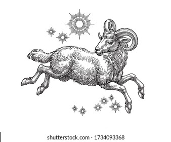 Hand drawn  illustration in the engraving style, Aries, zodiac sign on white.