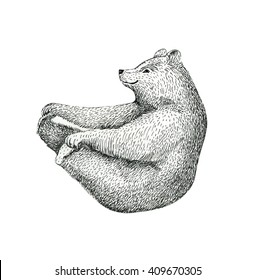 Hand drawn  illustration of fun a bear isolated on vintage background. Print posture of morning practice pranayama asana pose yoga. Spirit graphic character. Workout, sport