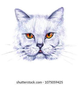 Hand Drawn Illustration Isolated On White Background Watercolor Portrait Of A British Cat Design