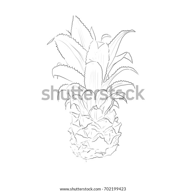 Hand drawn illustration. Pineapple isolated on the white background
