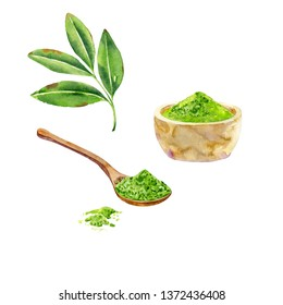 Hand drawn ingredients for japanese tea ceremony. Green leaves, wooden spoon and matcha powder in a bowl. Watercolor illustration on white background.