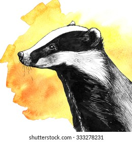Hand drawn ink sketch of badger on bright orange watercolor background