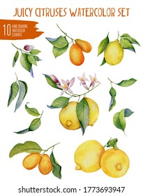 Hand drawn juicy citruses watercolor set on white