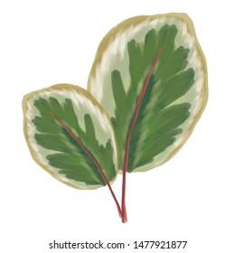 hand drawn leafs foliage in artsy style
