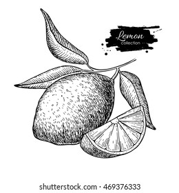 Hand drawn lemon or lime fruit with  leaves on branch. Tropical summer fruit engraved style illustration. Detailed citrus drawing. Great for water, juice, detox drink, natural cosmetics