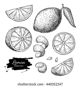 Hand drawn lime or lemon set. Whole lemon, sliced pieces, half, leaf and seed sketch. Summer fruit engraved style illustration. Detailed citrus drawing. Great for tea, juice, natural cosmetics