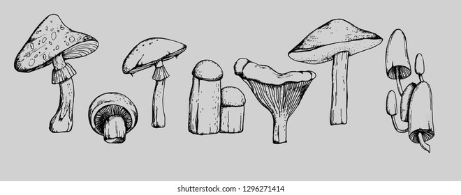 hand drawn, line art, illustration set of mushrooms, with amanita, boletus, champignon, chanterelle and honey agaric on grey background