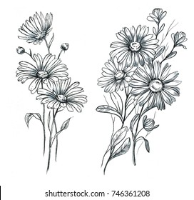 Hand drawn line art and watercolor chamomile flowers. Graphic daisies blossom, feminine tattoo designs. Blooming floral bouquets
