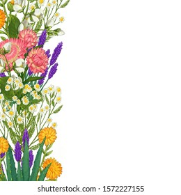 Hand drawn medicinal plant frame. Healing herbs border. isolated on white background. Floral Illustration of hawthorn, pharmacy chamomile, poppy, immortelle calendula