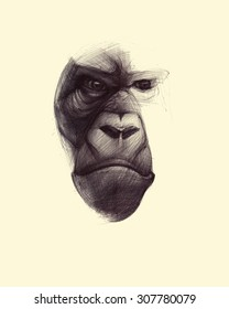 Hand drawn  monkey face  illustration isolated on yellow background. Ballpoint pen drawing.