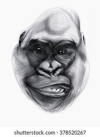 Hand drawn monkey face isolated on white. Ballpoint pen drawing.
