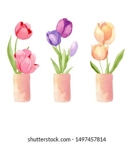 Hand drawn muticolored tulip flowers in vase isolated on white background. Watercolor illustration.