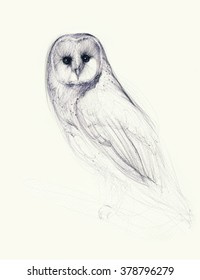 Hand drawn owl isolated on white. Ballpoint pen drawing.