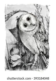 Hand Drawn Owl in Pencil with Nature Background