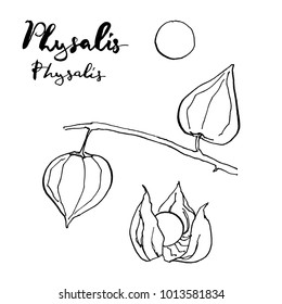 hand drawn painted set of graphic sketch of isolated berries Physalis,  groundcherries, Inca berry, Cape gooseberry, poha berries, golden berries on white background with handwritten words
