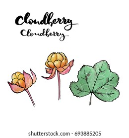 hand drawn painted set of watercolor sketch of isolated berries cloudberry,bakeapple, knotberry, knoutberry, aqpik, low-bush salmonberry,averin, evron, on white background with handwritten words