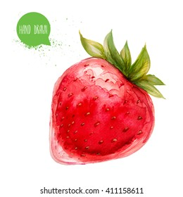Hand drawn and painted watercolor ripe strawberry. Isolated on white background. Berries and fruit illustration.