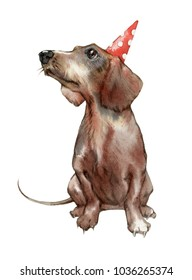 Hand drawn painting of Dachshund dog. Portrait of a cute dog. Watercolor illustration of Dachshund dog.