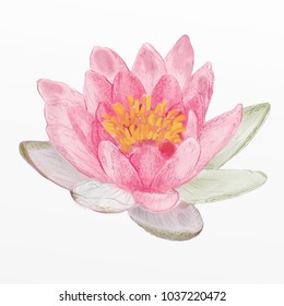 hand drawn painting illustration isolated on white background.  Pink flowers lotus (water lily, Indian lotus, sacred lotus, Egyptian lotus).