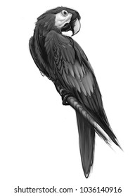 Hand drawn parrot isolated on white background. Digital painting.