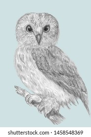Hand drawn pencil graphic wild owl on blue background. owl-pictures
