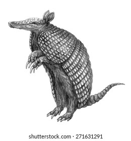 Hand drawn pencil illustration of armadillo. Cute south american animal with shell