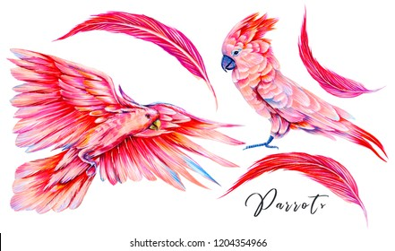 Hand drawn pink parrots print, feathers set. Watercolor exotic birds, cockatoo parrot illustration. Tropical elements isolated on white background