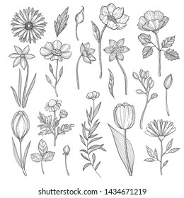 Hand drawn plants. pictures isolate on white. Illustration of sketch floral drawing, natural flower and flora