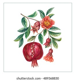 Hand drawn pomegranate fruit on a branch with leaves and flowers. Isolated eco natural food fruit illustration on white background.