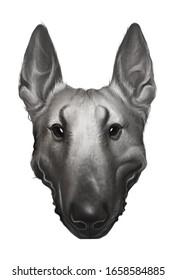 hand drawn portrait of bullterier