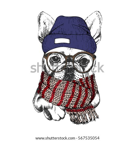 d9609376 hand drawn portrait of cozy winter dog. French bulldog wearing knitted scarf,  beanie and