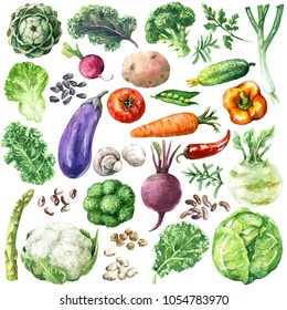 Hand drawn raw food illustration. Set of organic products. Watercolor various vegetables, greens and beans isolated on white background.