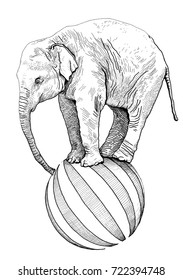 Hand drawn realistic sketch of an elephant standing on a ball. circus animal illustration isolated on white background. Zoo animal. Line art draw.