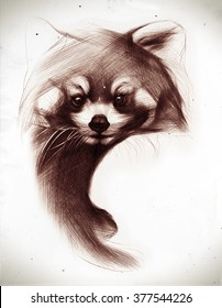 Hand drawn red panda isolated on white. Ballpoint pen drawing.