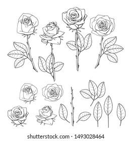 hand drawn rose flower. floral design element isolated on white background. stock illustration.